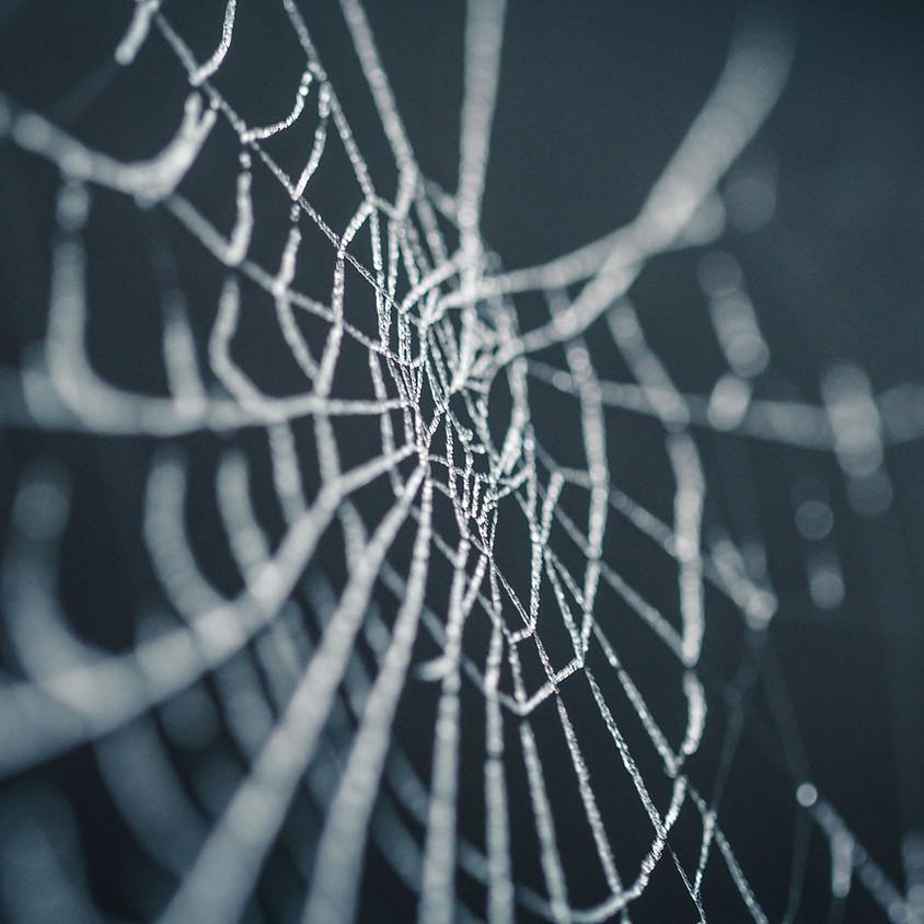 Spider Identification Workshop