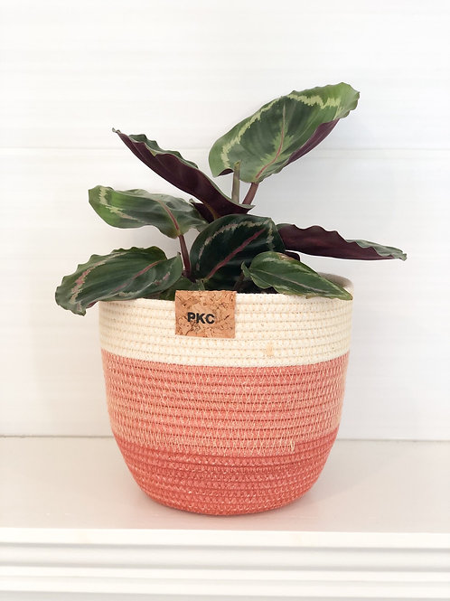 Terracotta 3 colour Rope Basket