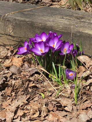 Signes du printemps