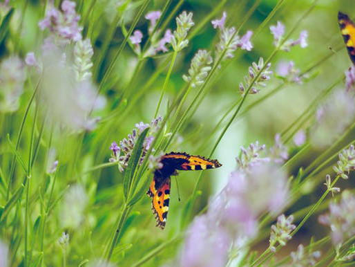 Leadership Tip #7: Make those butterflies fly in formation