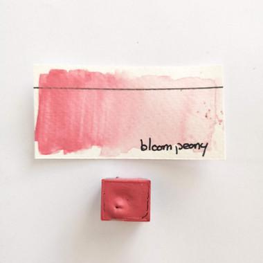 Bloom peony