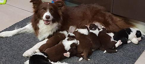 Dart and puppies.jpg