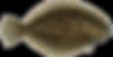 flounder2.png