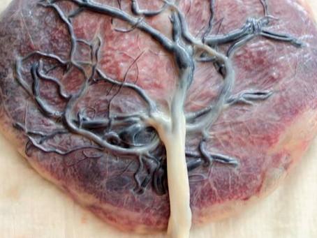 Sobre a Placenta