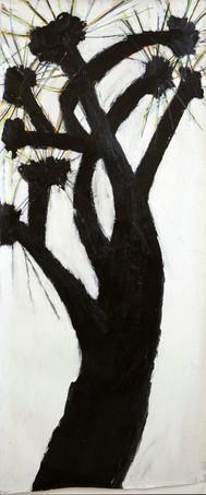 Darkling Fir 2012