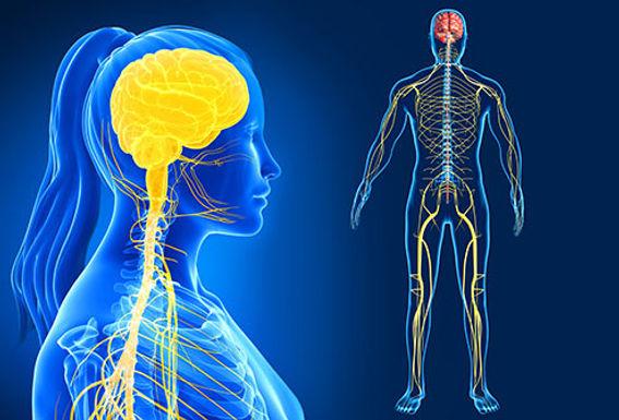 Nervous System Integration