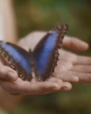 hand holding butterfly.jpg
