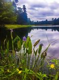 retreat nature.jpg