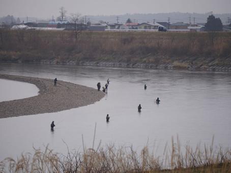 米代川水系サクラマス共通券販売のお知らせ
