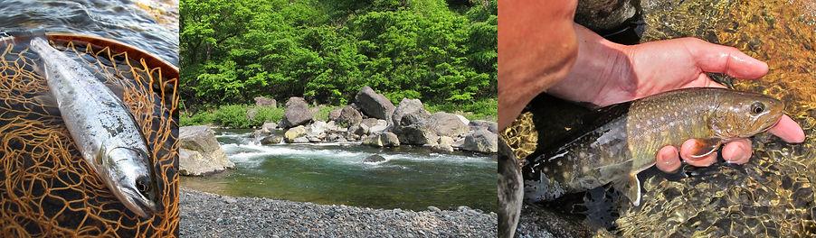 九頭竜川と渓魚.jpg