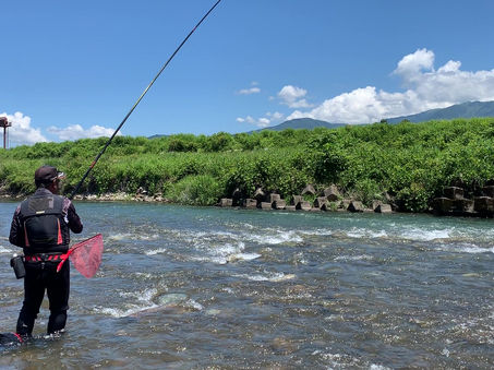 真名川での鮎釣り風景
