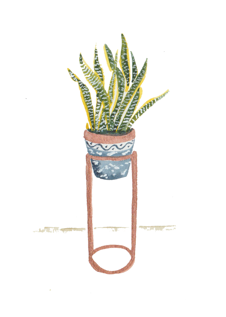 Snake PLant.png