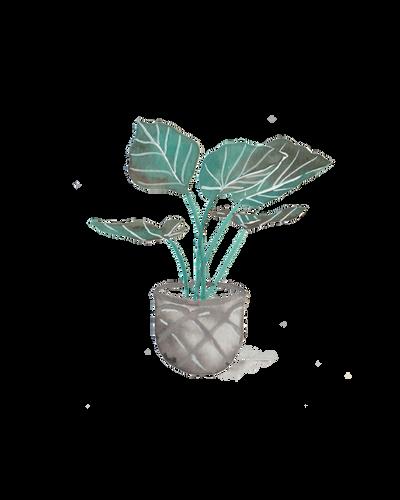 Grey Pot.png