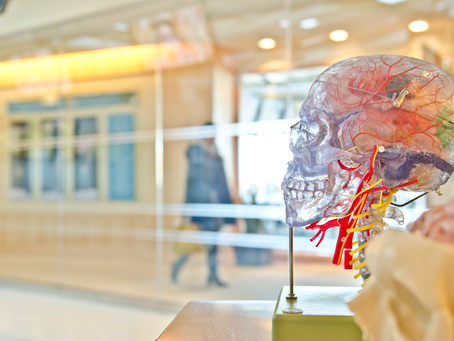 What makes a neurologist?