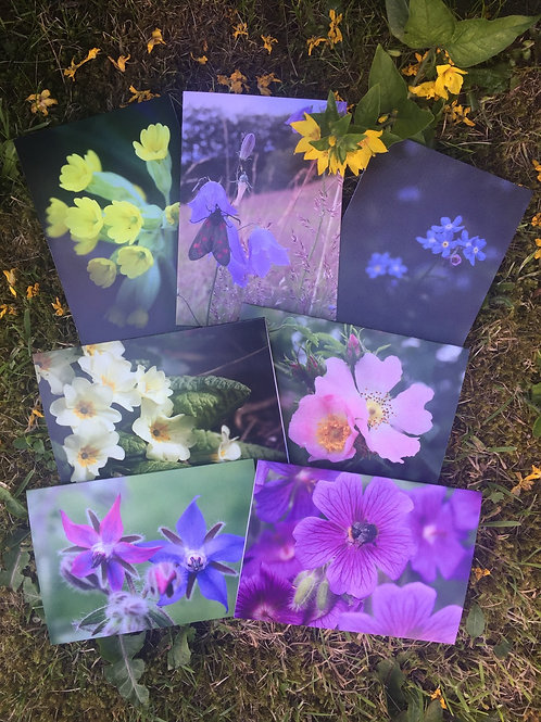 Set of seven 'Fabulous Flowers' greetings cards