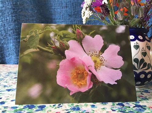 'Dog rose' greetings card