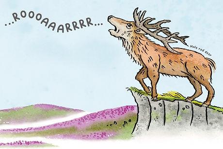 roar deer.jpg