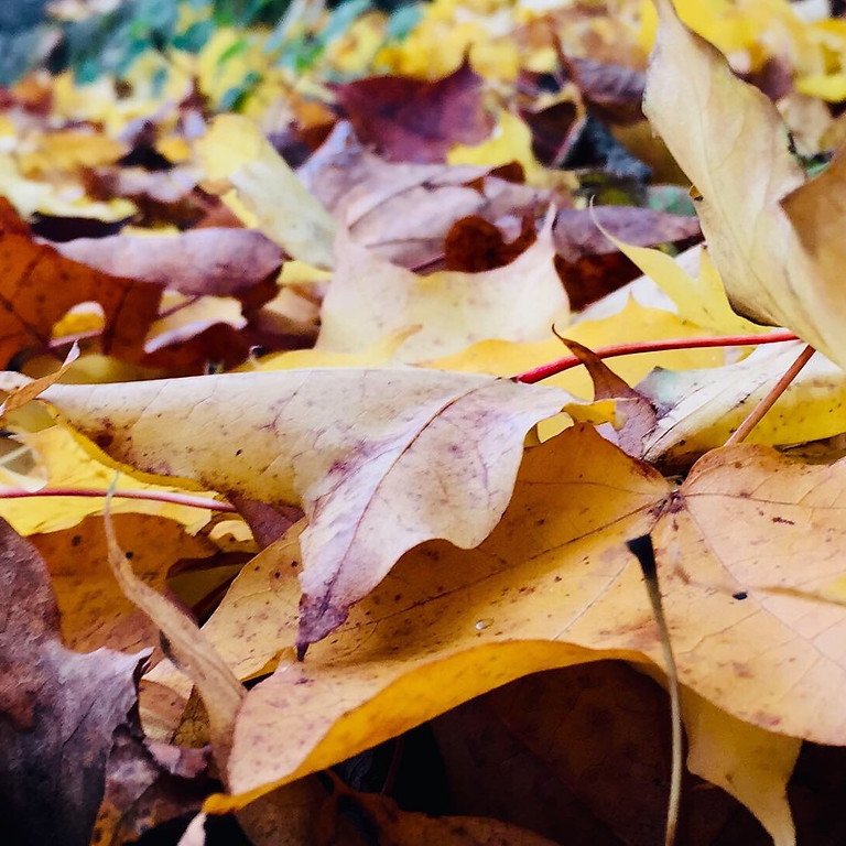 Artful Autumn - Spirit of Nature day