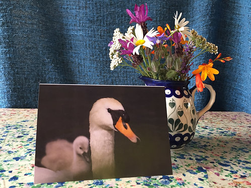 Set of four Artful Animals greetings cards