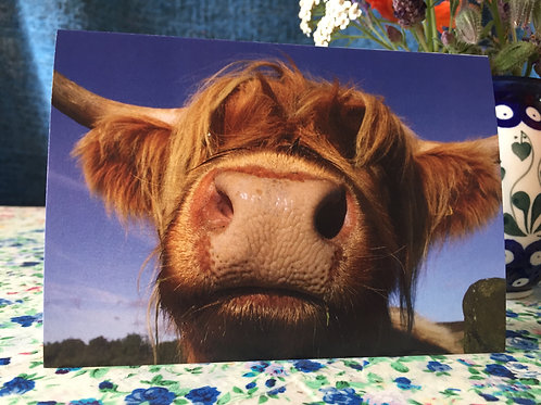 Pack of five 'Highland cow' greetings card