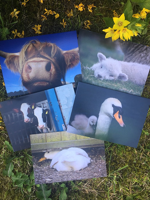 Set of five 'Artful Animals' greetings cards