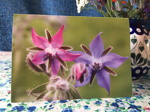 'Borage' greetings card