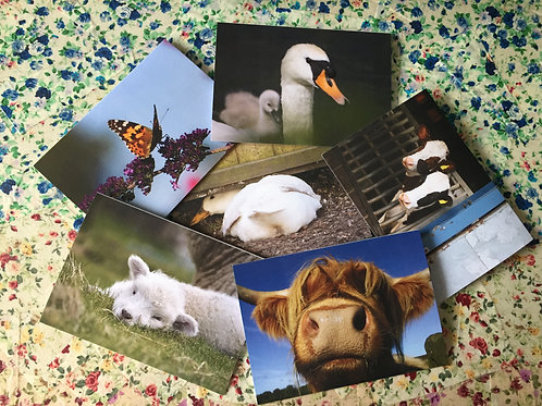 Set of six Artful Animals greetings cards