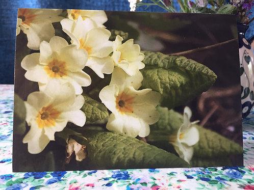 'Primroses' greetings card