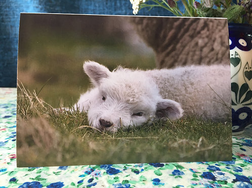 'Sleepy lamb' greetings card
