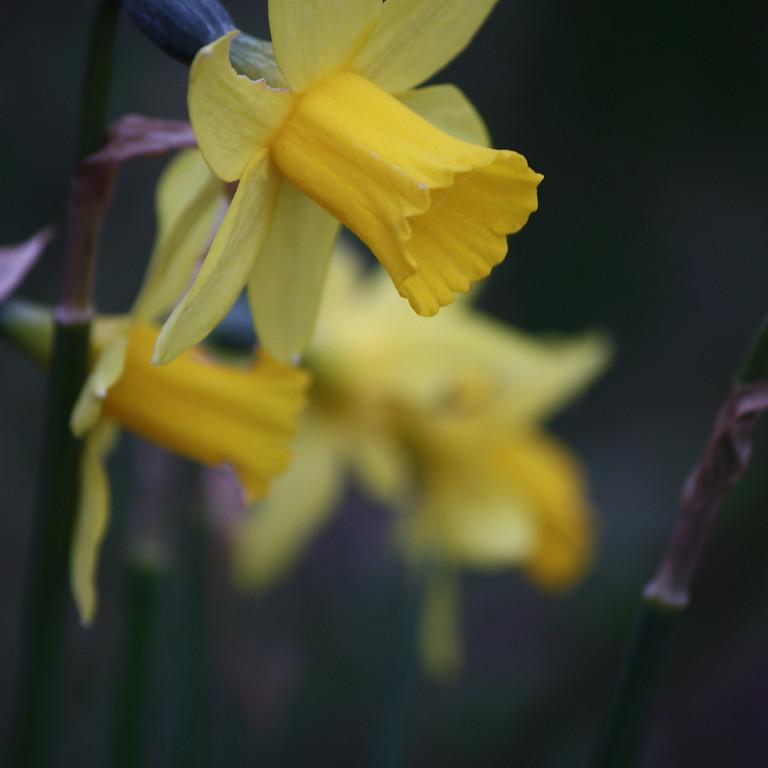 Springtime - Spirit of Nature day