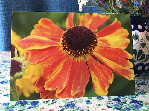 'Sneezeweed' greetings card