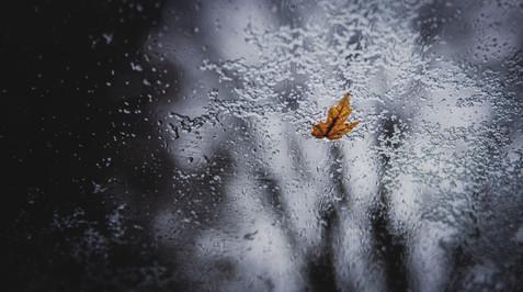 Fall and Snow 1.jpg
