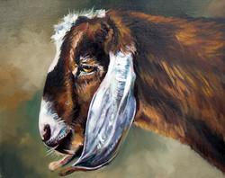 Godfrey the Goat