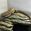 Thumbnail: Major plated lizard