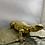 Thumbnail: Nigerian Uromastyx (Yellow)juvenile