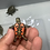 Thumbnail: Western painted turtles CB