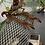 Thumbnail: Malaysian cat gecko