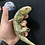 Thumbnail: Monkey tail skink