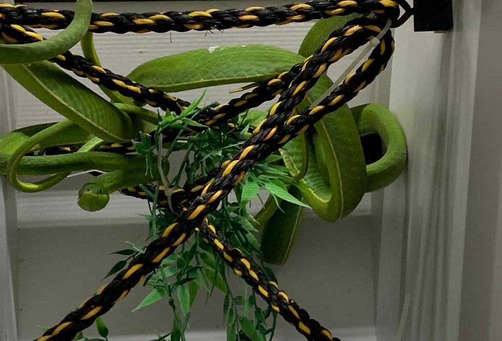 C.A green vine snake