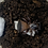 Thumbnail: Chinese hourglass trap door spider