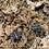Thumbnail: Oak toad