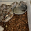 Thumbnail: Guyana Redtail boa (#074GB)