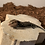 Thumbnail: Bluetongue skink CB