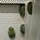 Thumbnail:  Australia White Tree Frog cb baby