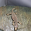 Thumbnail: Savannah Monitor (Hatchling)