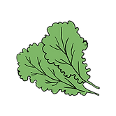 kale-01.png