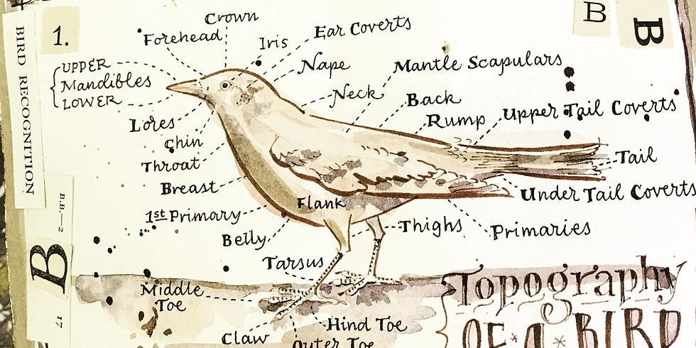 Vintage Bird Diagrams