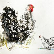 Chicken Sketching!