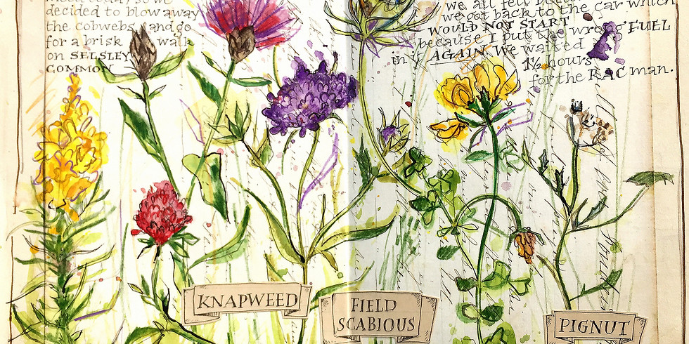 Wild Flower Sketchbook Explosion!