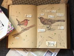 Illustrated Bird Diagram Workshop